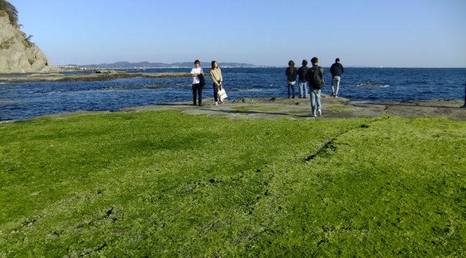 わたしに、ただいま 江の島